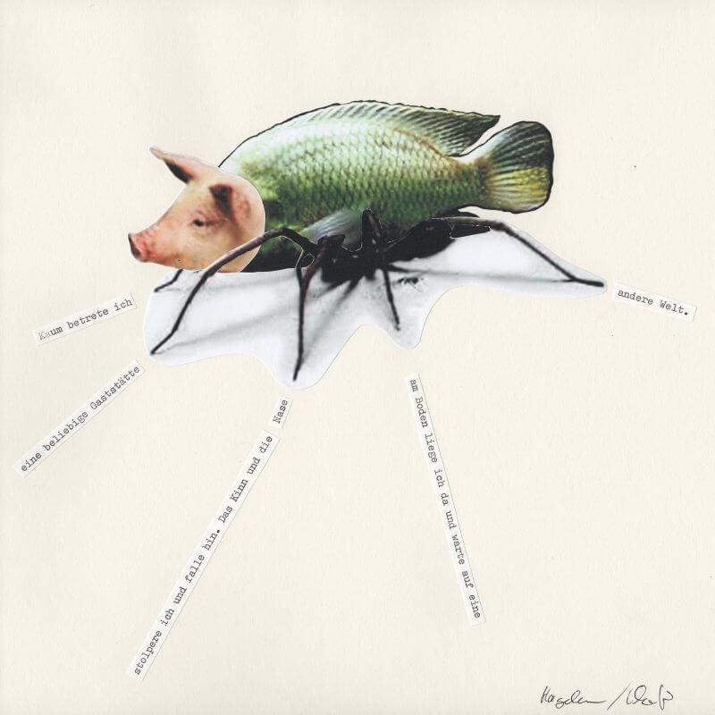 Hagedorn / Khanfir - Schweinefischspinne